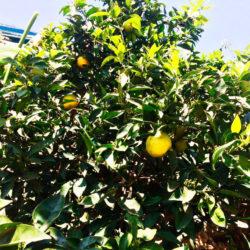 Frutteto 2