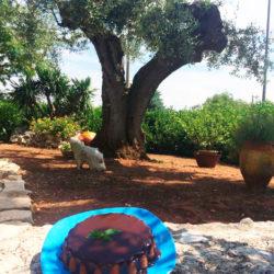 Colazione tra gli ulivi