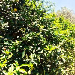 Frutteto 3